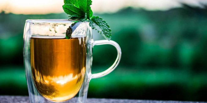 Bockshornklee Tee